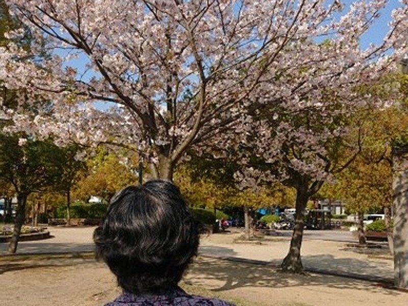 中央公園(春)